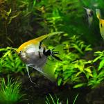 ザリガニは水草を食べてしまう?食べたザリガニが全滅!?