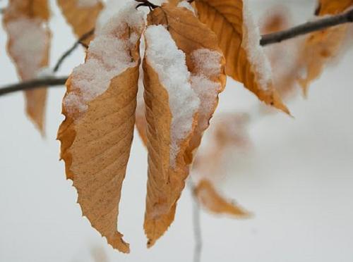 ザリガニ 冬場 飼育