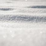 ザリガニの飼い方、越冬はどうする?