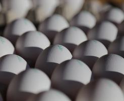 ザリガニ 卵 殻