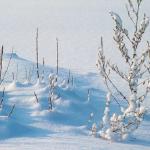 ザリガニの赤ちゃんは冬をどう越すのか?