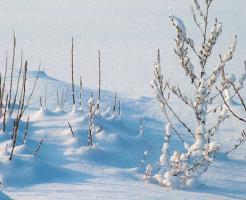 ザリガニ 赤ちゃん 冬
