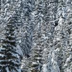 ザリガニを冬眠で越冬させる場合、水温など気を付けたい点