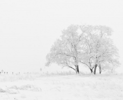 ザリガニ 冬 外