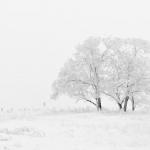 ザリガニが冬眠するのに最適な温度とは