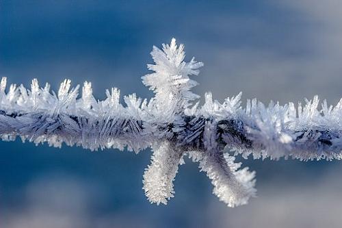 ザリガニ 冬 捕獲
