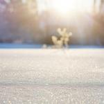 ザリガニの冬の過ごし方と動かない理由について