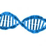 ザリガニの染色体の数