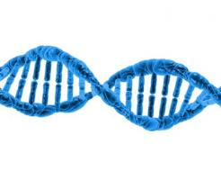 ザリガニ 染色体 数