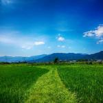 田んぼに生息しているザリガニは何故水が無くても春にはまた戻ってくるのか