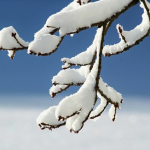 冬眠前にもおすすめ!栄養価の高いザリガニの餌をご紹介