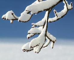 ザリガニ 冬 餌 (1)