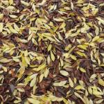 ザリガニは何の枯葉を好むのか
