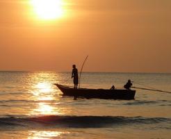 ザリガニ 釣り方 餌