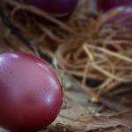 ザリガニの黒い卵は有精卵、稚ザリガニの成長について