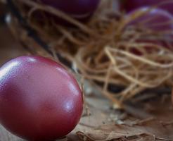 ザリガニ 卵 黒い