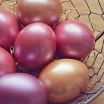 ザリガニの卵の色とその変化について